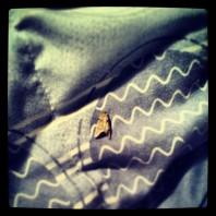 Spotted a naughty moth resting on my pillow just before transcribing the poem. How much stranger can this get?
