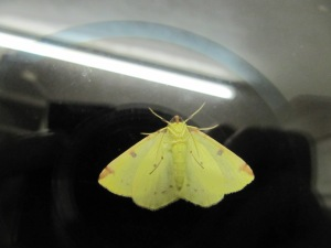 A moth photograph, to match the one I posted on day one of NaPoWriMo.