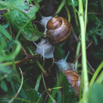 Snails in the underbrush
